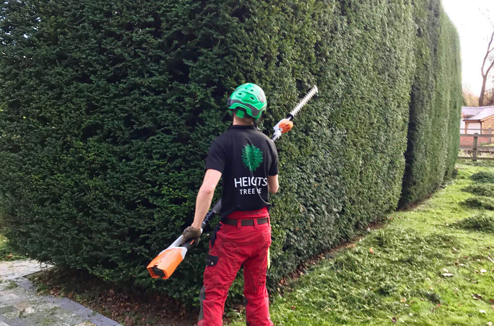 Our hedge care specialists trimming a hedge