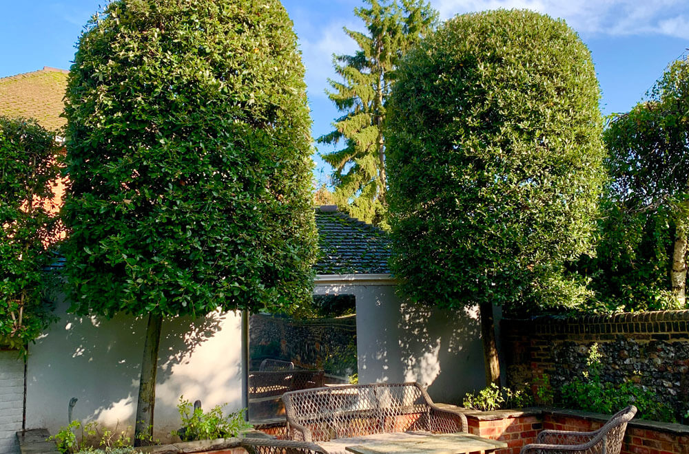 Two beautifully sculpted trees after using our topiary service
