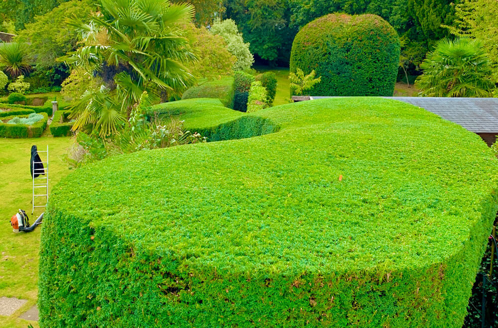A beautifully sculpted hedge following our topiary service